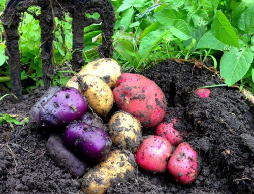 Soil for Life Organic Home Food Gardening Course
